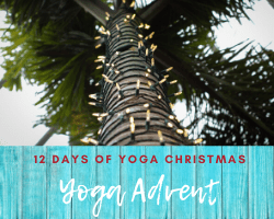 palm tree wrapped in Christmas lights illustrating yoga advent or the 12 dyas of Christmas yoga